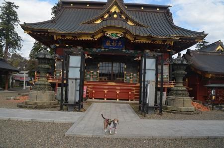 20171111阿波の大杉神社09