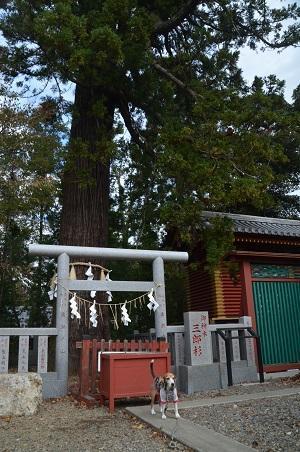 20171111阿波の大杉神社18