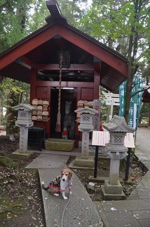 20171111阿波の大杉神社29
