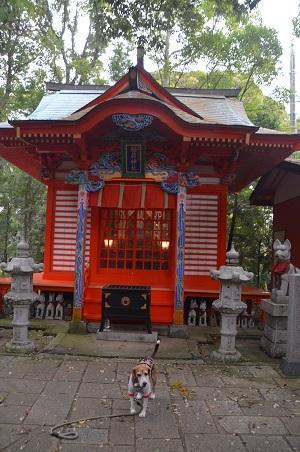 20171111阿波の大杉神社26