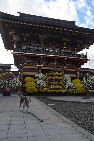 0171111御朱印巡り 大杉神社06