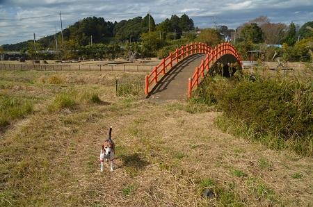 20171111阿波水辺公園03