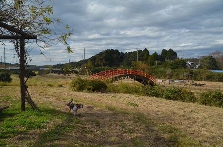 20171111阿波水辺公園02