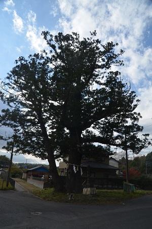 20171111阿波水辺公園16