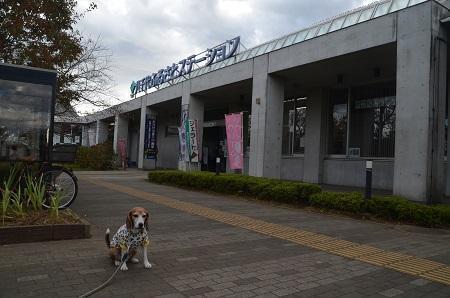20171119道の駅 八千代06
