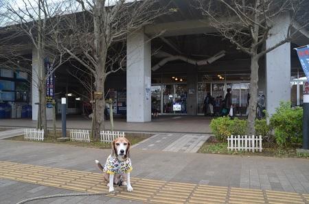 20171119道の駅 八千代07