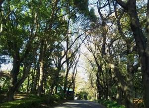 koen-maruyama-11gatu3.jpg