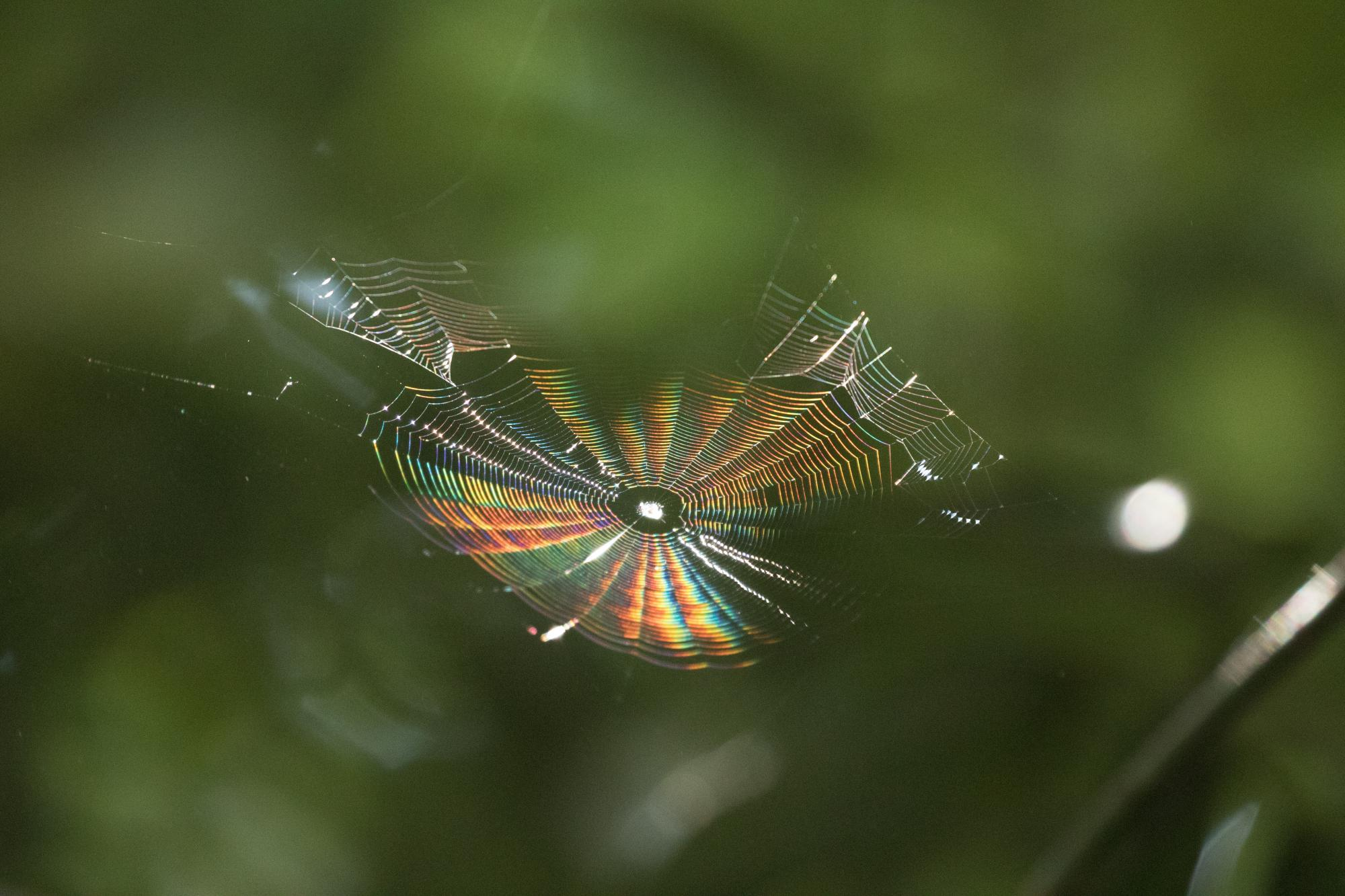 20171009-蜘蛛の巣