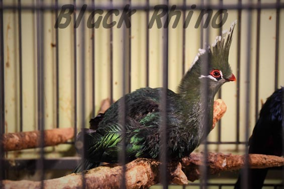 リビングストーンエボシドリ1 めっちゃさわれる動物園