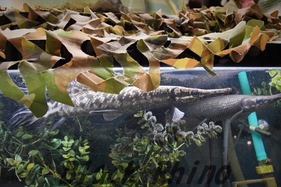 トロピカルジャイアントガー3 めっちゃさわれる動物園