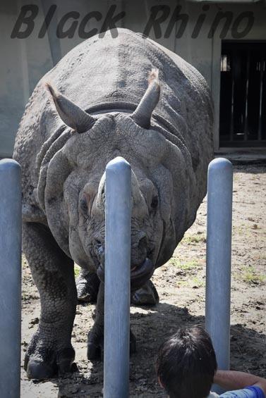 インドサイ セラ2 東山動物園