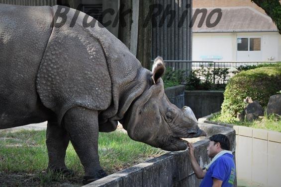 インドサイ ブンタ1 東山動物園