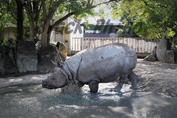 インドサイ ブンタ2 東山動物園
