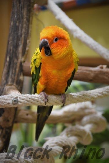 コガネメキシコインコ2 めっちゃさわれる動物園