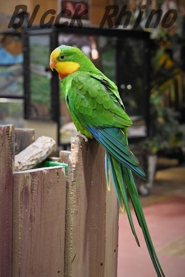 ミカヅキインコ オス2 めっちゃさわれる動物園