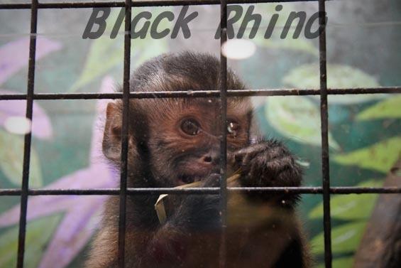 フサオマキザル めっちゃさわれる動物園