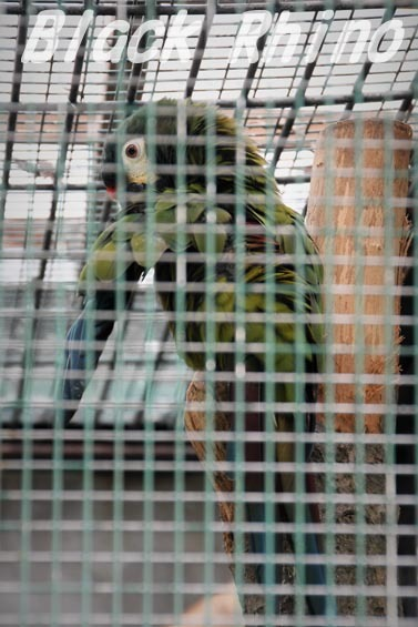 アカビタイヒメコンゴウインコ1 東山動物園