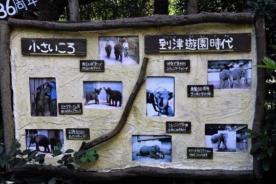 セイロンゾウ解説2 到津の森公園