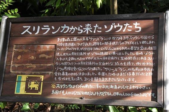 セイロンゾウ解説3 到津の森公園