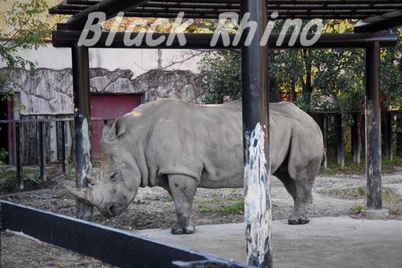 ミナミシロサイ3 東武動物公園