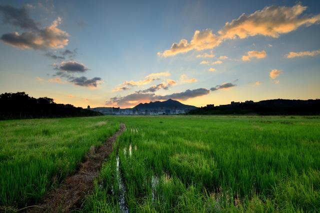畦道がある風景