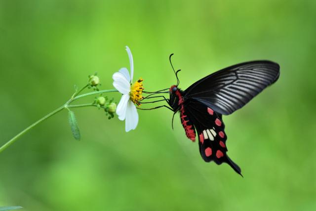 美しい蝶には毒