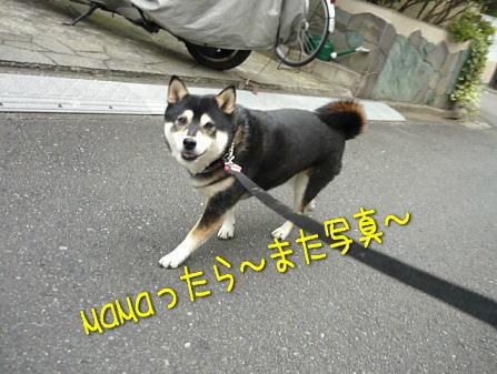 walk1sakura10sai1.jpg