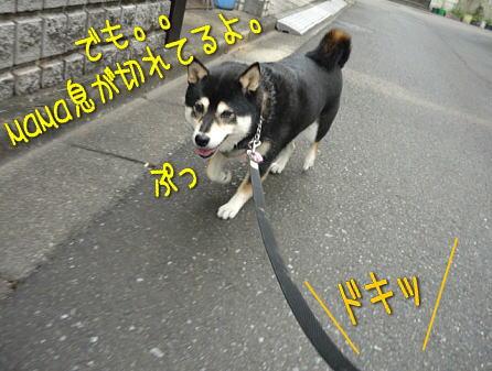 walk3sakura10sai3.jpg