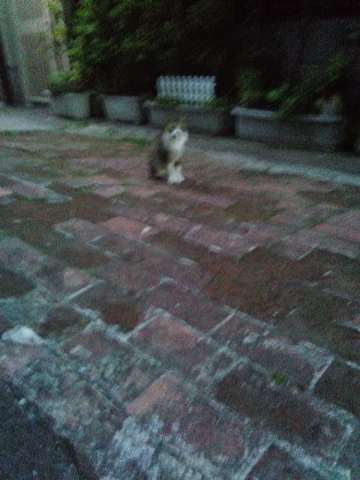 野良猫6月5日5