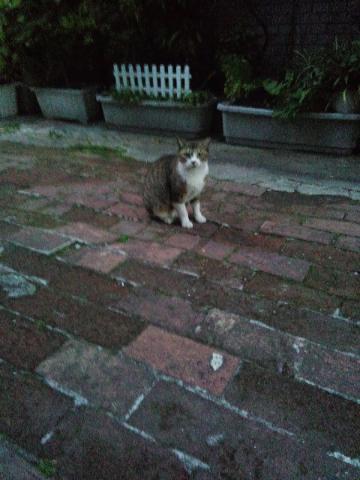 野良猫6月5日6