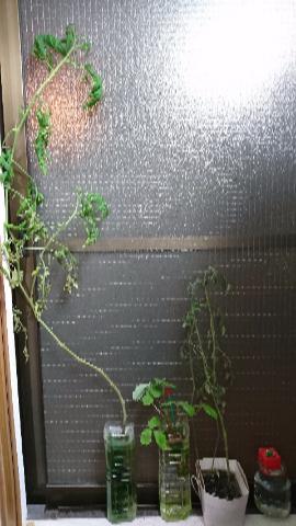 窓辺菜園への道8月5日