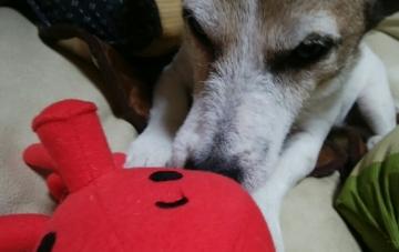 小梅おもちゃ