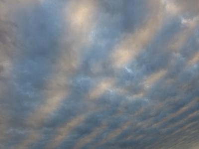 171120-13=白水色ストライプ雲fm前庭