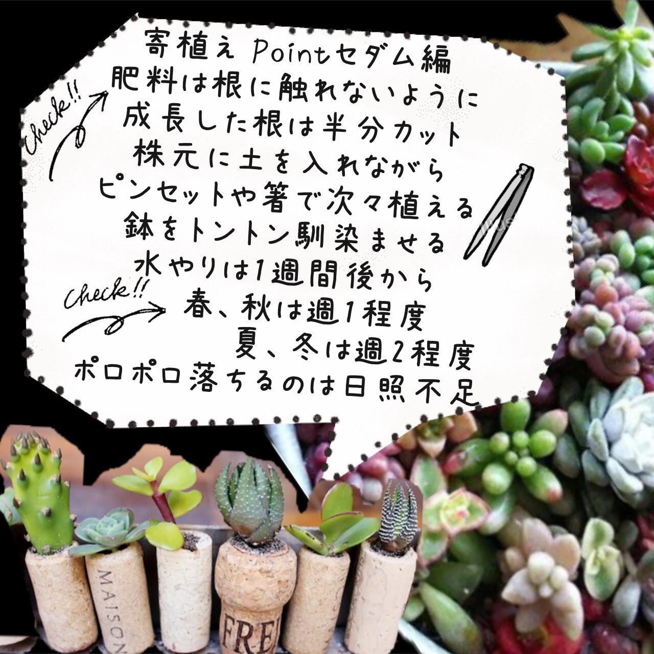 プチコノカ塚口多肉植物_171027_0014