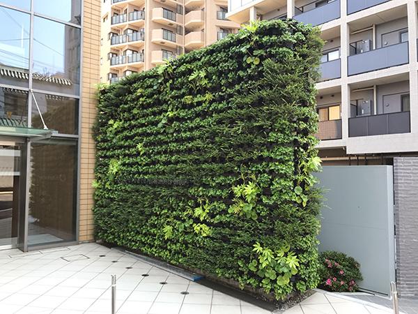 コーポラティブハウスと緑化3