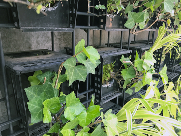 コーポラティブハウスと緑化5