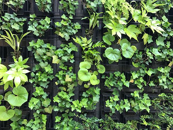 コーポラティブハウスと緑化6