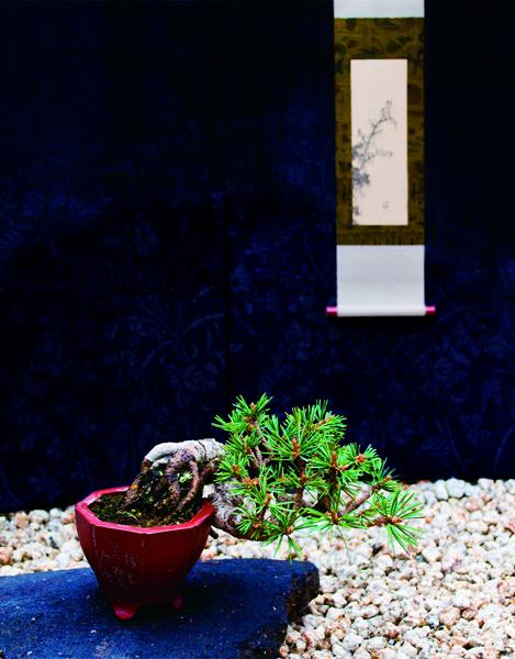 小品盆栽と小さな表装の世界展