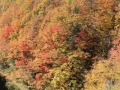 2018nakatugawakeikoku-kouyou12-web600.jpg