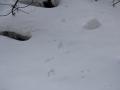 2019gosikinuma-hatu-snowsyu41-web600.jpg