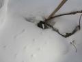 2019gosikinuma-hatu-snowsyu8-web600.jpg