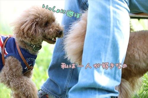 BIMG_0395_P.jpg
