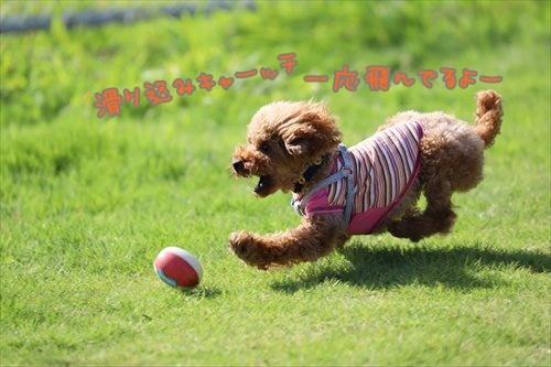 MIMG_0276_P.jpg