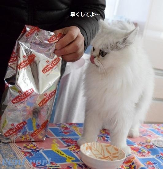 ダイエット4