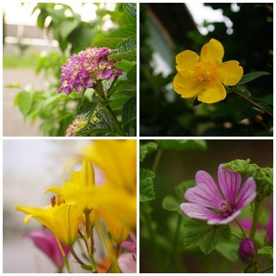 朝の花page
