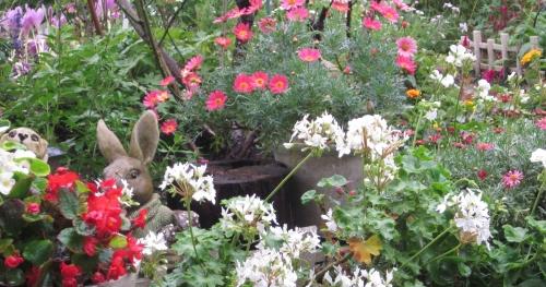 庭の鉢花たち