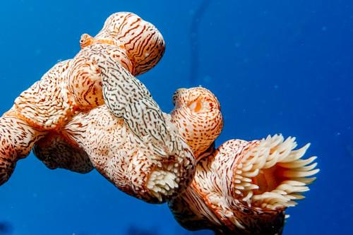 最近の海の生き物