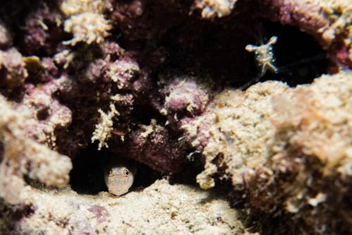 海の生き物はムズカシイ