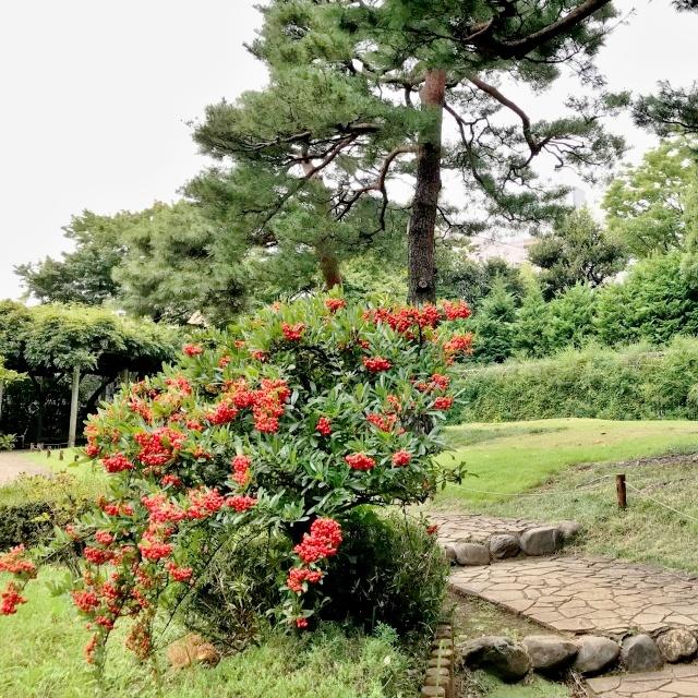 殿ヶ谷戸庭園 (21)