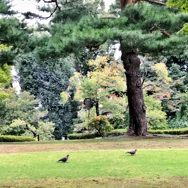 殿ヶ谷戸庭園 (23)